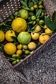 Assorted citrus fruit in box