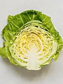 A freshly harvested spring cabbage