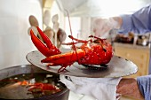 A steaming, freshly cooked lobster