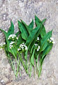 Fresh ramsons (wild garlic) leaves and flowers
