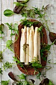 White asparagus and fresh herbs
