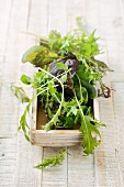 Wild herb salad in a wooden box