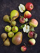 Several varieties of apples and pears