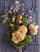A still life with stone crop flowers and chestnuts