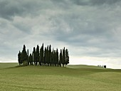 Cypress trees on hilly landscape near San Quirico d'Orcia, Tuscany, Italy