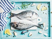 Fresh Sea bream or dorado raw uncooked fish with seasoning on white board over turquoise blue tray background