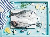 Zwei frische Meerbrassen mit Gewürzen auf türkisblauem Tablett