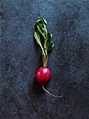 A radish on a dark grey background