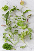 Various wild herbs on a marble background (seen from above)