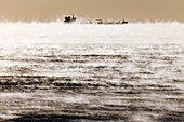 Cargo ship in early morning ocean mist
