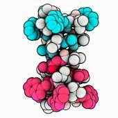Gramicidin A ion channel