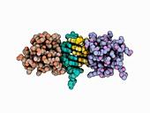 Z-RNA editing enzyme complex