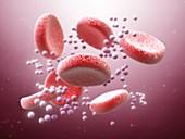 Zika virus in bloodstream, illustration