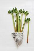 Fresh rhubarb stalks wrapped in newspaper