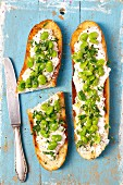 Baguette with cream cheese, red radishes and broad beans