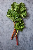 Rhubarb stalks with leaves