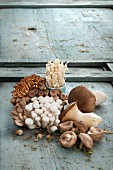 Various mushrooms from Asia