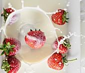 Erdbeeren fallen in Milch