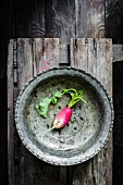 Single radish in a metal bowl on a dark background