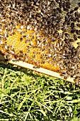 A beehive in Andreas Jörg's alpine apiary in Kranzegg, Allgäu, Bavaria, Germany