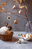Live bunny in basket surrounded by Easter decorations