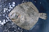 Raw fresh whole flounder fish on crushed ice over dark wet metal background