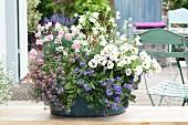 Schale bepflanzt mit Scaevola (Fächerblume), Petunia (Petunie), Lobularia (Duftsteinrich), Dianthus (Nelken) und Gaura (Prachtkerze)
