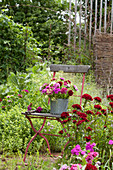 Stuhl im Beet zwischen Dianthus barbatus (Bartnelken) im Bauerngarten, Strauß im Zinkeimer