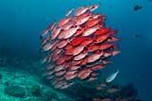 Pinjalo over reef