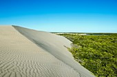 Sand dunes encroaching on mangroves