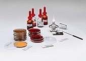 Gram staining of MRSA