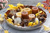 Breite Schale mit Kerzen, Fruchtstaenden von Castanea sativa ( Marone