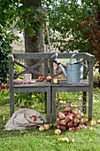 Holzbank im Garten, Korb und Sack mit frisch geernteten Malus ( Aepfeln )