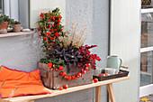 Pyracantha ( Feuerdorn ), Salvia officinalis 'Purpurascens' ( Roter Salbei )