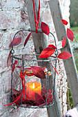 Windlicht mit roten Blaettern von Vaccinium ( Heidelbeere ) in Drahtkorb