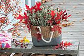 Korbtasche mit Calluna vulgaris Garden Girls 'Alicia' ( Knospenheide