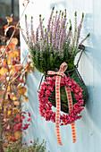 Calluna vulgaris Garden Girls 'Rosita' ( Knospenheide, Besenheide )