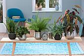 Holzbank mit Zimmerpflanzen als Raumteiler :