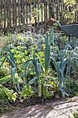 Gemüse- und Kräutergarten im Spätherbst  :