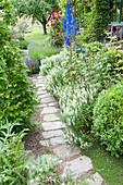 Weg aus Natursteinplatten am Beet mit Salvia nemorosa 'Schneehuegel'