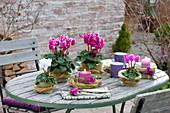 Herbstliche Tischdeko mit Cyclamen mit Filzverkleidung und Graskraenzen