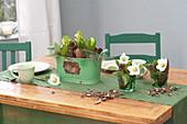 Gruene Metall-Jardiniere mit Hyacinthus orientalis 'White Pearl'