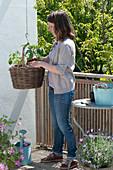 Korb mit Tomate und Kapuzinerkresse bepflanzen :