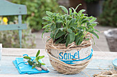 Selbstgemachter Korb aus Sisal mit Salvia officinalis ( Salbei )
