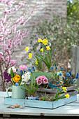 Buntes Frühlings-Arrangement mit Höhenstaffelung :