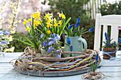 Narcissus 'Tete a Tete' ( Narzissen ), Anemone blanda ( Frühlings-Anemone )