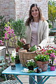 Frau bepflanzt Korb mit Rosmarinus ( Rosmarin ) Stämmchen, Bellis