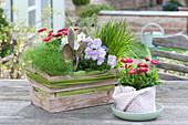Geschenk - Korb mit Kräutern und essbaren Blüten :