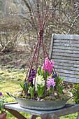 Flache Zinkschale bepflanzt mit Hyacinthus orientalis ( Hyazinthen )