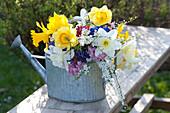 Bunter Frühlingsstrauß in Zink-Gießkanne : Narcissus ( Narzissen ), Spiraea